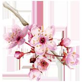 La Maison Espagnole | Flor de Cerezo | Innovación y Creación de Fragancias y Cosmética| Magasalfa