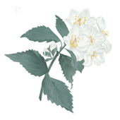 La Maison Espagnole | Jazmín | Innovación y Creación de Fragancias y Cosmética| Magasalfa